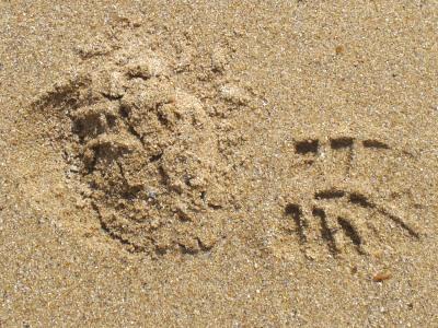 heavy footprint in sand