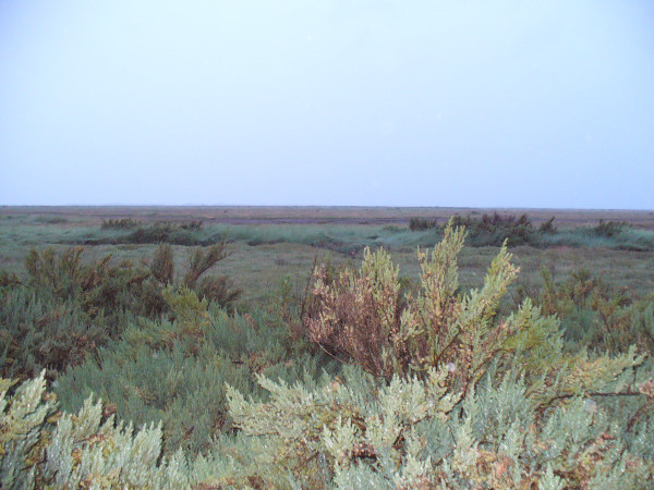 evening falls on the blakeney salt marshes